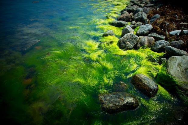 Havets färger