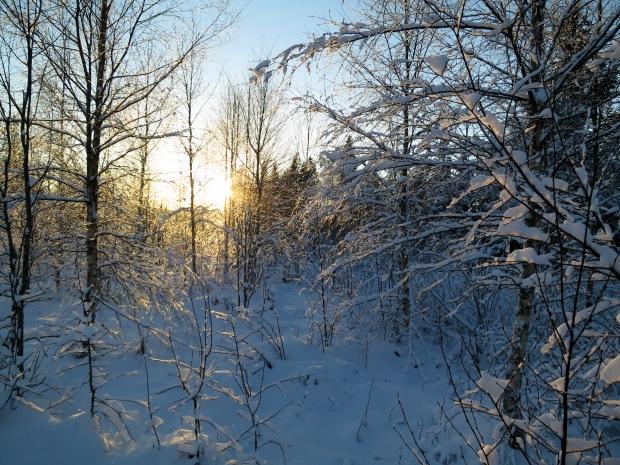 VinterljusIMG_0940_1884
