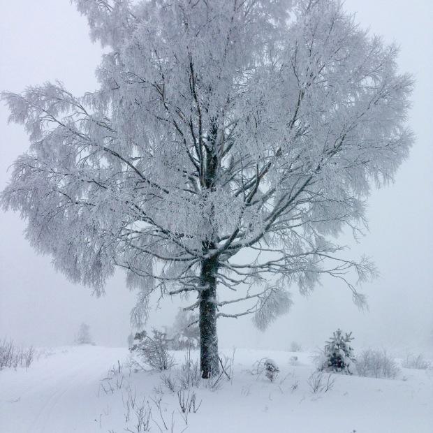 VinterträdIMG_1908_2005